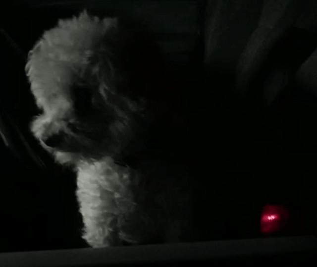 Saving a puppy from a locked car last night